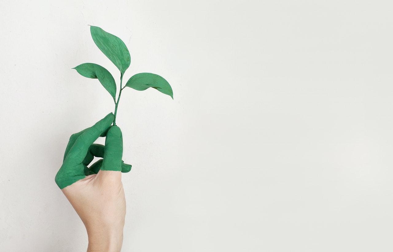 nathalie-language-experiences-tendencias-innovacion-empresarial-producto-empresa-sostenible